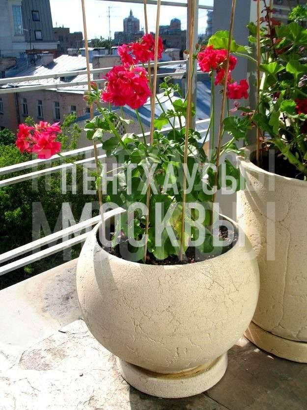 Сад на крыше дома у Патриарших прудов